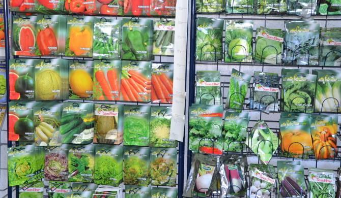 Agricultura: o que semear e plantar em cada mês do ano